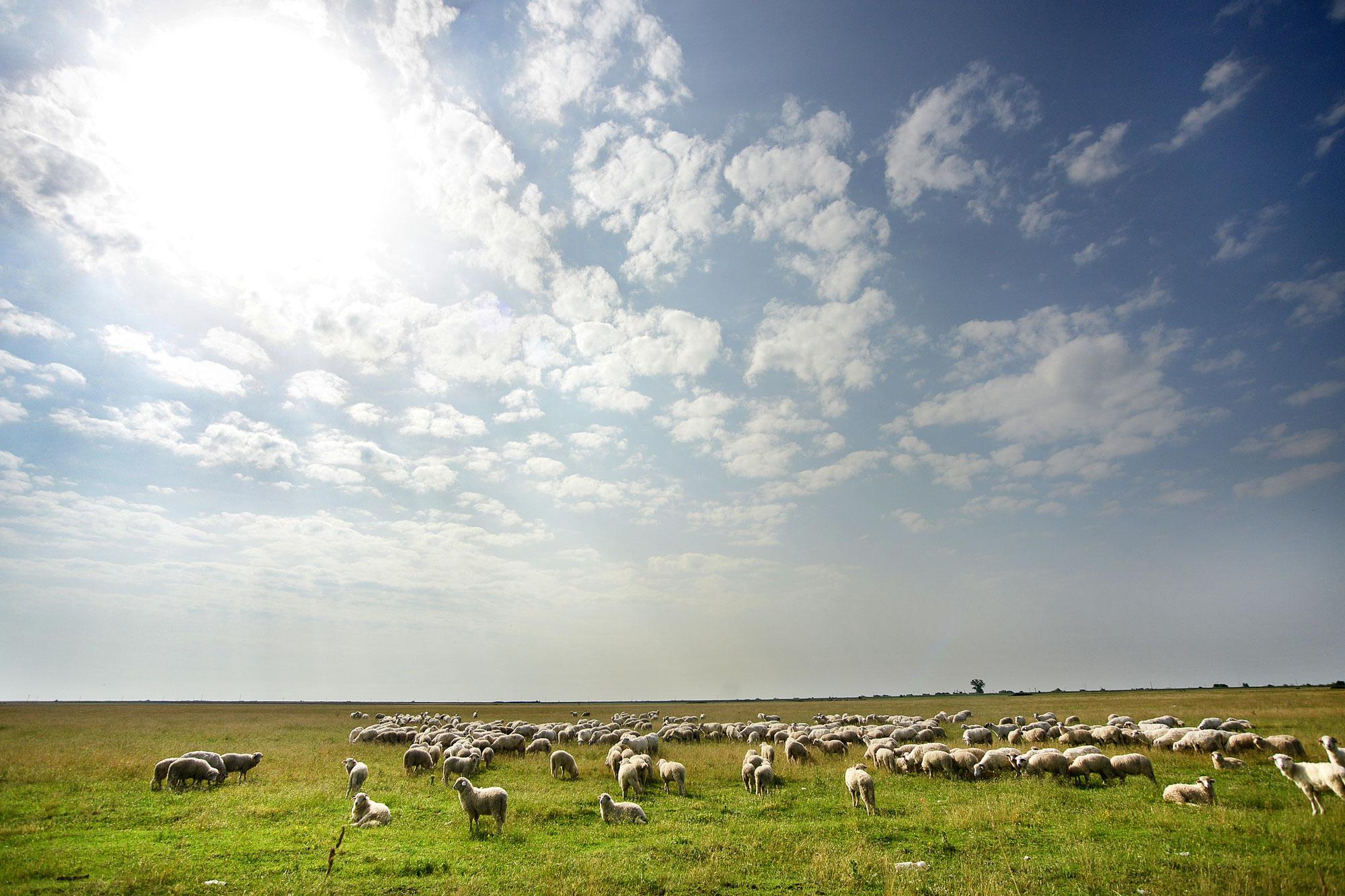 Pengegalopp på den rumenske landsbygda